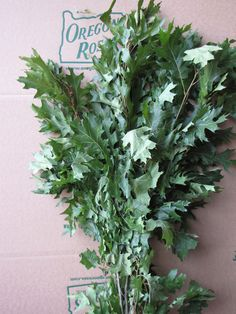 oak leaves for bouquets and tables?