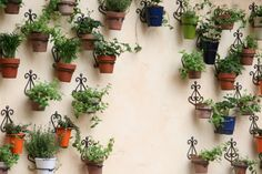 Best small cafe food | The patio is charming! I love this wall with individual hanging herbs ...
