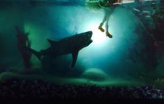Aquarium rempli de gelée alimentaire avec jouets requin et mini Barbie