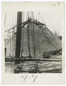 """Oyster shells for oyster """"farming""""."""