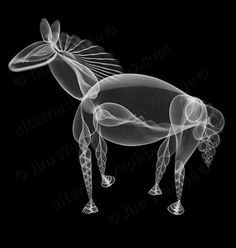 Radiographer and artist Jim Wehtje has a knack for creating unusual animal art. His new collection Arranged on Black showcases a variety of intricately placed and overlapping seashells which form fascinating skeletal animal X-ray photographs.