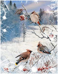 Collection Of World Best Real and Rare Awesome Gorgeous Painting Collection Of Animals and Birds Christmas Bird, Christmas Scenes, Christmas Pictures, Winter Christmas, Merry Christmas, Illustration Noel, Christmas Illustration, Winter Pictures, Bird Pictures