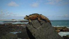 L'archipel des Galápagos à nouveau menacé par un naufrage