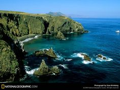 California Fool's Gold -- A Channel Islands Primer at the Amoeblog