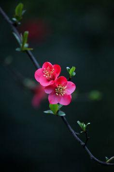 La flor que crece en la adversidad es la mas rara y bella de todas.  Mulan