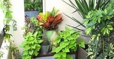 12 easy plants for your terrace garden Plants for the balcony garden come in almost every color and shape imaginable. Many plants do well in small containers and bring splashes of color to balcony container gardens. Apartment Balcony Garden, Small Balcony Garden, Terrace Garden, Balcony Gardening, Balcony Ideas, Apartment Gardening, Container Gardening, Balcony Flowers, Small Balconies