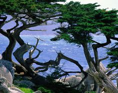 Monterey Big Sur