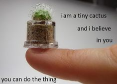 I am a tiny cactus and I believe in you.  You can do the thing.