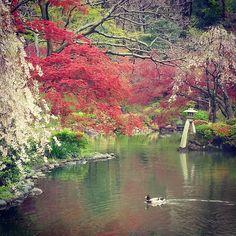 Lunchtime wanderings in Hiroo by sarahsutterphoto via Instagram #spring #Tokyo #Japan #pond #Sakura