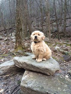 The first hike of puppy. http://ift.tt/2dO5QWd