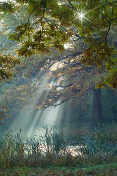 misty autumn day  #nature