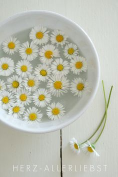 Fototermin mit Daisy My grand kids used to float beautiful flowers in bowls during the summer ~ good memories. Happy Flowers, My Flower, Beautiful Flowers, Art Flowers, Flowers Nature, Flower Petals, Deco Floral, Arte Floral, Sunflowers And Daisies