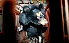 China's bear farms, where for decades bile has been extracted from the   endangered animals in horrific conditions, have been condemned by eminent   Chinese scientists.