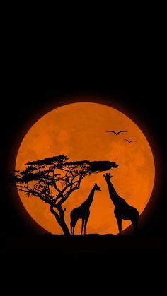 Giraffe mobile wallpaper, hd wallpapers for mobile, wallpaper backg Dark Wallpaper, Nature Wallpaper, Wallpaper Backgrounds, Mobile Wallpaper, Wallpapers, Beautiful Wallpaper, African Sunset, African Paintings, Art Africain