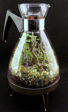 Miniature Garden in a coffee pot