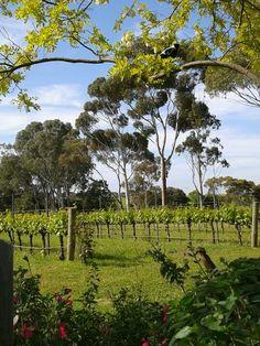 Fox Creek Wines  McLaren Vale