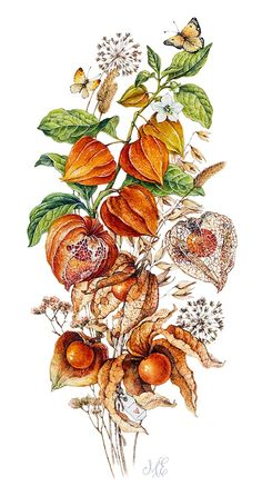 Flower art painting draw artworks 67 New ideas Botanical Drawings, Botanical Prints, Plant Drawing, Painting & Drawing, Illustration Botanique, Illustration Art, Watercolor Flowers, Watercolor Paintings, Flower Art