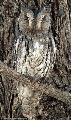 ~ Owl  ~ Great for camouflage.