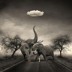 """Maddox & Terrance On A Weekend Road Trip"" by Michael Ticcino via andrewsgibson.com/blog"