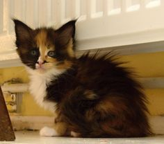 Malé kotě Cassi