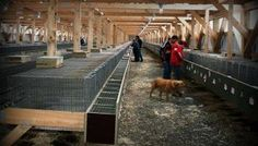 Calling PETA: U.S. Fur Farming Is Strictly Regulated