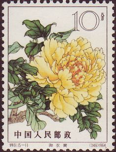 imperial yellow robes  Heirloom Chinese Tree Peonies