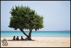 Traveling around the south coast of Turkey, I found this deserted beach with one lone tree and a family taking shade underneath it.