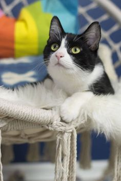 tuxedo cat sitting in macrame hanging in a colorful girls bedroom