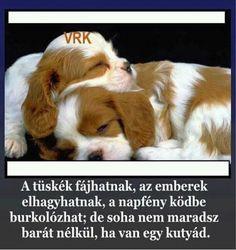Pets, Animals, Bible, Animales, Animaux, Animal, Animais, Animals And Pets