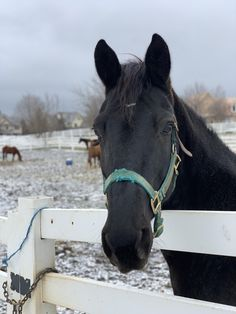 it's been a bit snowy here but my boy absolutely loves it 😍 : Horses Cute Horses, Pretty Horses, Horse Love, Beautiful Horses, Animals Beautiful, Horse Photos, Horse Pictures, Cute Animal Pictures, Cute Funny Animals