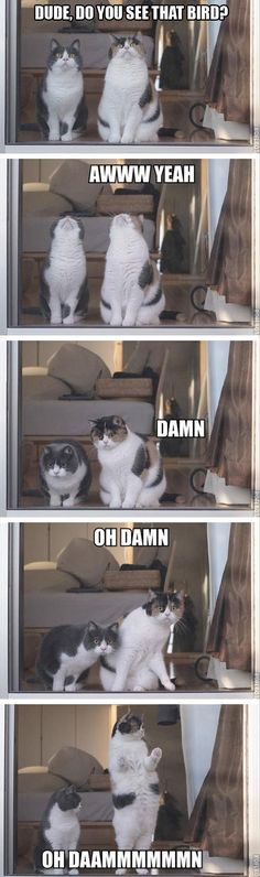 Dude, do you see that bird? #cats #meme #lolcats