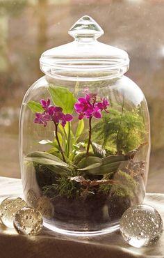 Orchids – Home Decor Gardening Flowers Moss Garden, Succulents Garden, Garden Plants, Indoor Plants, Terrarium Diy, Orchid Terrarium, Orchid Plants, Orchids, Imagen Natural
