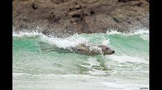 Chapoteando entre las olas..