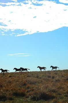 Running Mustangs by Ree Drummond / The Pioneer Woman, via Flickr