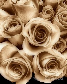 Pantone Iced Coffee 2016 Color    Sepia Roses