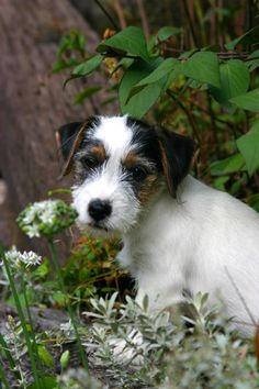Adorable Finch in the garden. Thanks James for sharing!  #dogs  #ProvenWinners