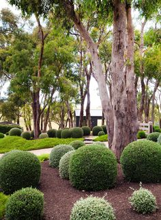 garden on Victoria's Mornington Peninsula Located on Victoria's Mornington Peninsula, this coastal country inspired garden is full of zen, packed with Australian natives and manicured hedges.Located on Victoria's Mornington Peninsula, this coastal country Cottage Garden Design, Modern Garden Design, Contemporary Garden, Australian Garden Design, Australian Native Garden, Modern Landscaping, Garden Landscaping, Landscaping Ideas, Topiary Garden