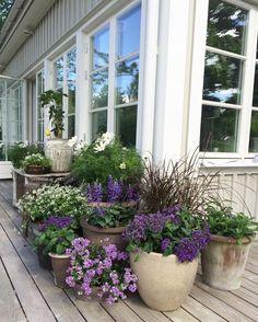 Beautiful monochromatic container garden