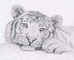 Un petit tigre