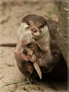 Otters :)