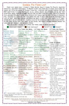 guinea pig food list printable | Guinea Pig Food List