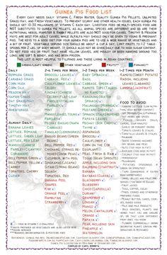 guinea pig food list printable | Guinea Pig Food List