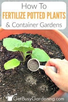Fertilizing potted plants is important in order to grow healthy, productive, and beautiful containers. Find out why it's so important to feed the soil in container gardens (great info for beginners! Fertilizer For Plants, Organic Fertilizer, Organic Gardening, Garden Fertilizers, Container Flowers, Container Plants, Succulent Containers, Gardening For Beginners, Gardening Tips