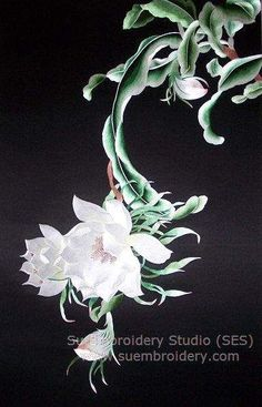 Epiphyllum, silk embroidery painting, all hand embroidered with fine silk threads on silk from Su Embroidery Studio, Suzhou China