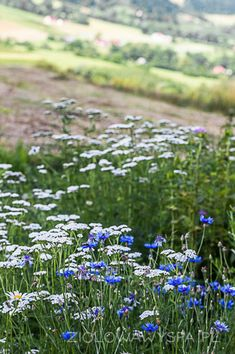 Natural Remedies, Herbs, Health, Nature, Plants, Magick, Diet, Naturaleza, Health Care