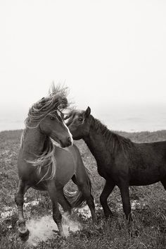 drew doggett || discovering the horses of sable island - Bliss