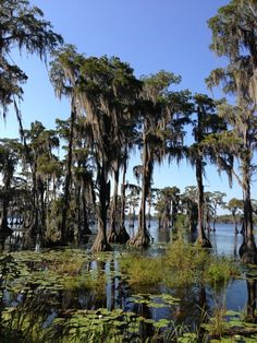 Visit Banks Lake in Lakeland, Ga. to explore more than acres of freshwater wetland. Georgia Habitats, Georgia Regions, Georgia Us, Camping World, Camping Equipment, Outdoor Adventures, Southern Charm, Adventure Awaits, Weekend Getaways