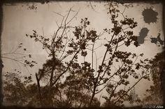 記憶如一陣風,隨之而去旋即莫名而來。苗栗 - 碧絡角