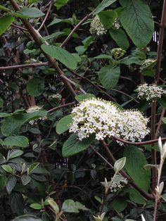 Een brede bloem