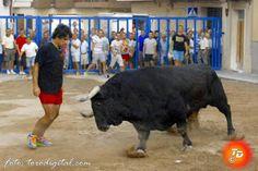 torodigital: El toro de la ganadería de Gavira protagonista en...